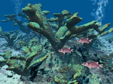 Coral reef underwater with small fishes
