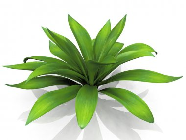 Green house plant