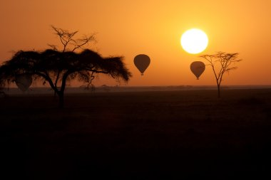 Hot Air Balloons flying over Serengeti Tanzania at sunrise.