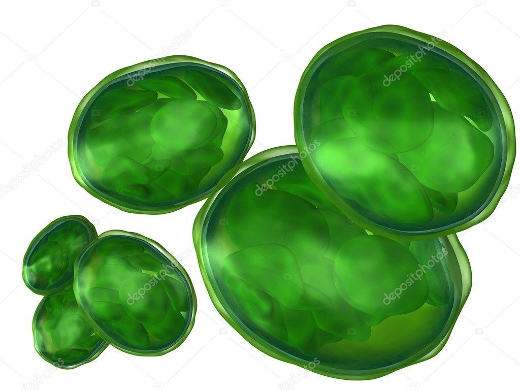 Chloroplasts isolated on white