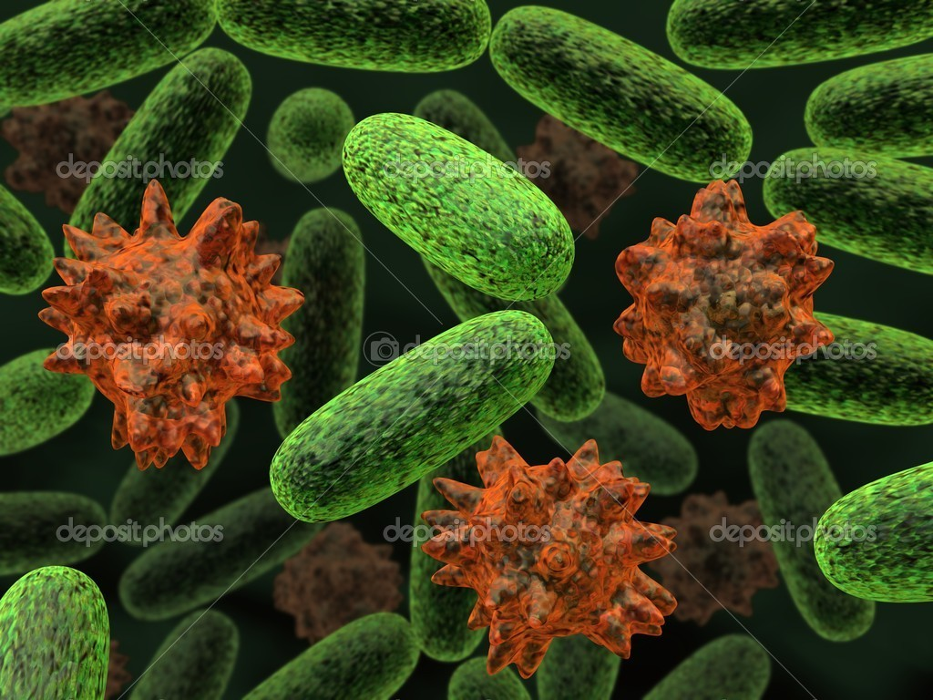 Transformed bacteria