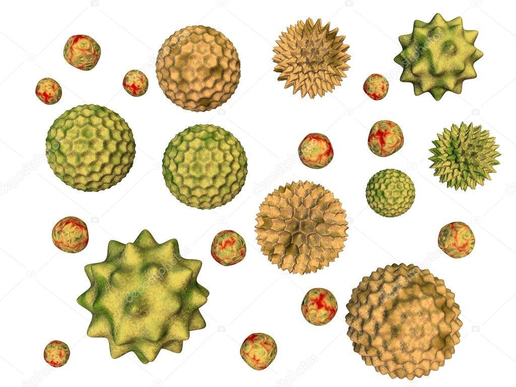 Pollen isolated