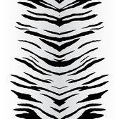 Fotografia zebre vettoriale
