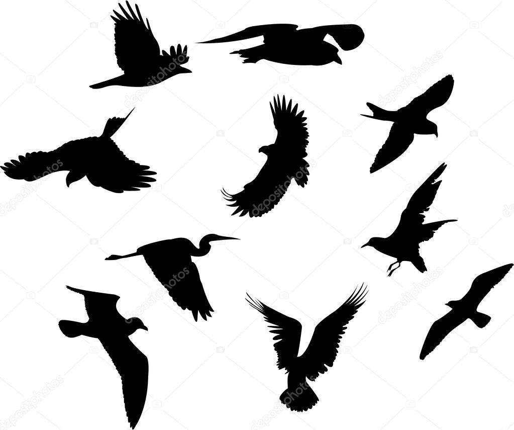 Ensemble de diff rentes esp ces d 39 oiseaux photographie witchera 6666051 - Differentes especes de pins ...