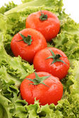 rotes Tomatengemüse auf grünem Salathintergrund