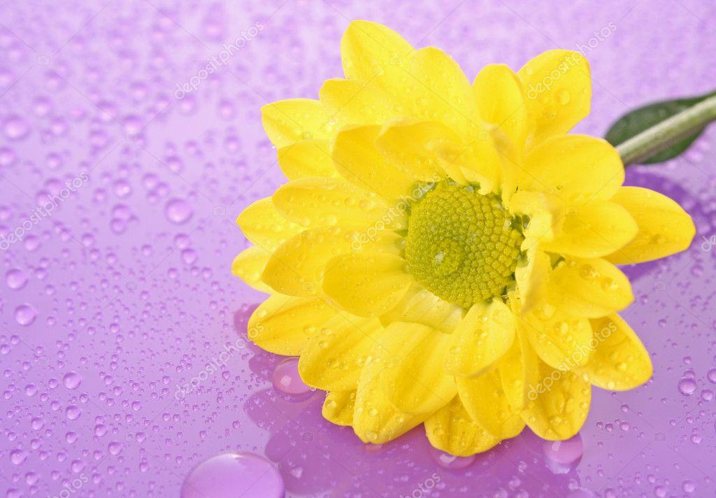 Днем, цветы с открыткой хорошего настроения