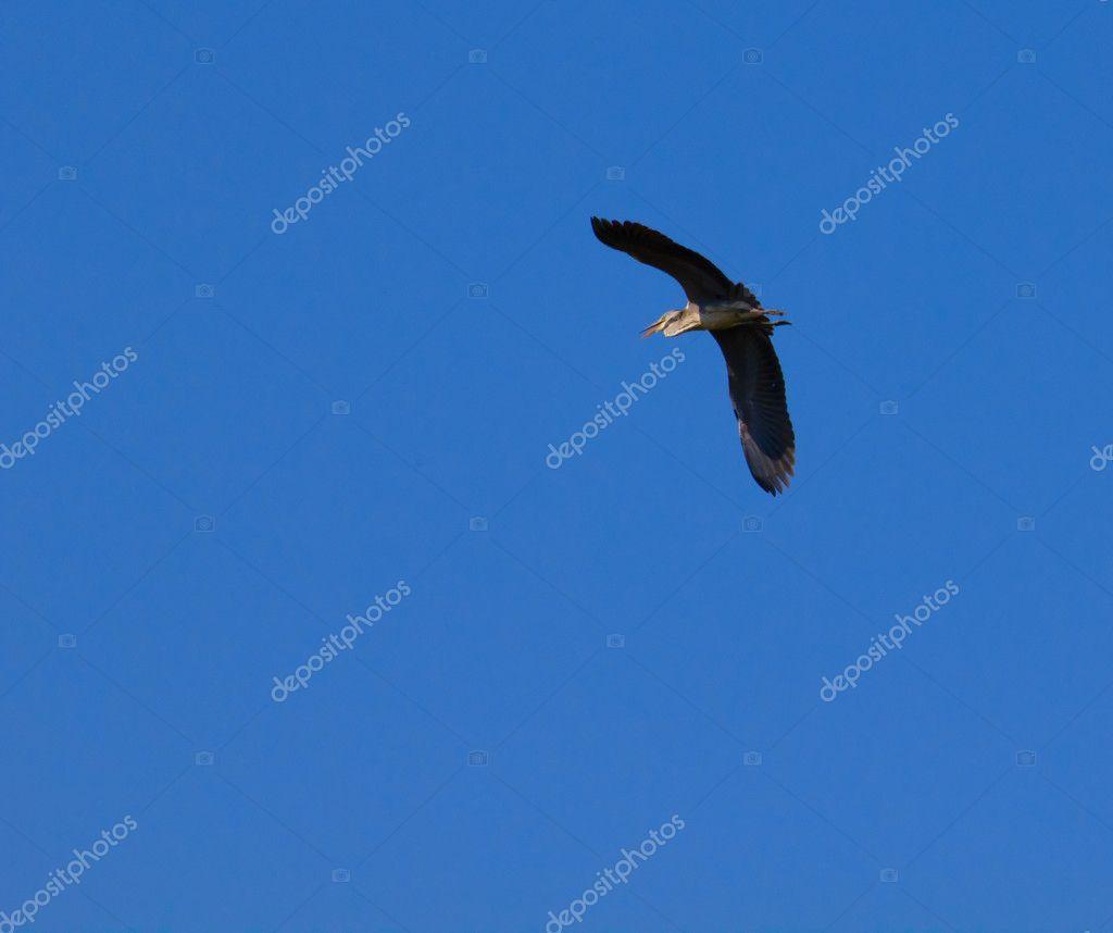 cegonha voando stock photo sserg dibrova 6730159
