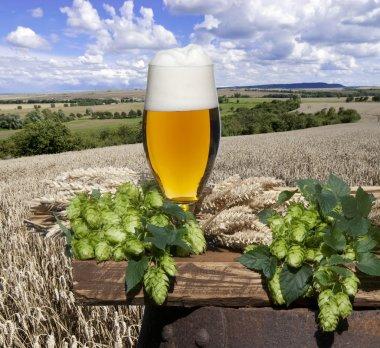 Stil life with beer