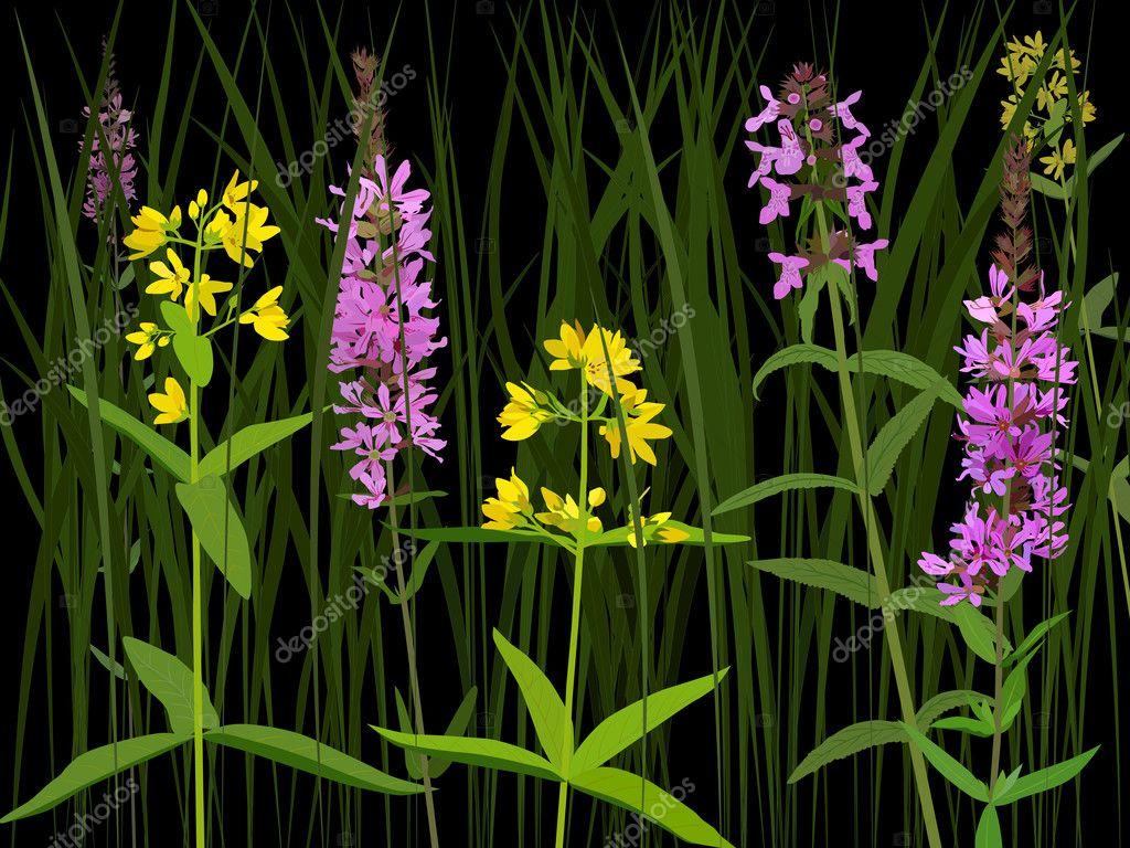 Meadow herbs — Stock Vector © onvial #6736004