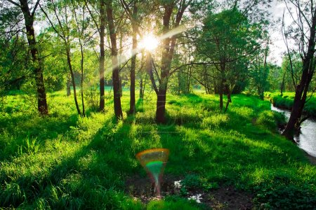 Photo pour Rayons de soleil entre les arbres verts à Kuzminki, Moscou - image libre de droit