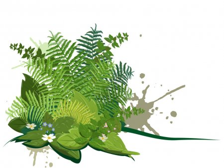Illustration for Composite of forest plants on a white background - Royalty Free Image