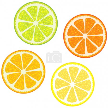 Illustration for Vector illustration of Slices of citrus fruits: Orange, red grapefruit, lemon and lime. Great for making patterns - Royalty Free Image