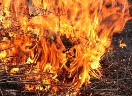Photo pour Un feu de forêt. Branches, flamme vive brûlante - image libre de droit