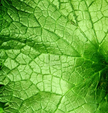 Photo for Square texture bright green leaf - Royalty Free Image