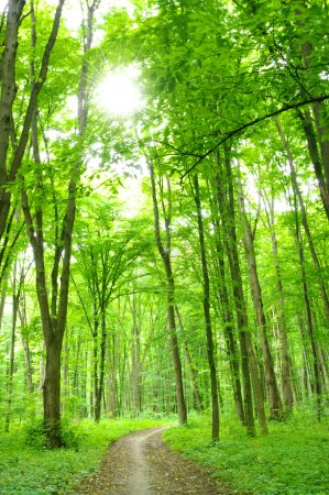 Photo pour Chemin d'accès dans la forêt verte de l'été - image libre de droit