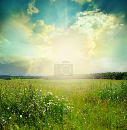 Photo for Green meadow under blue sky with clouds - Royalty Free Image