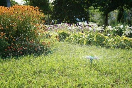 Photo pour Une tête d'arroseur saupoudre, et l'herbe verte pousse tout autour - image libre de droit