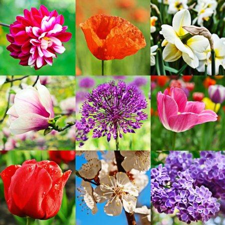 Foto de Collage de nueve imagen con diferentes tipos de flores - Imagen libre de derechos