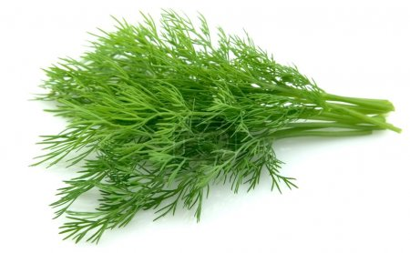 Photo for Fennel on a white background - Royalty Free Image