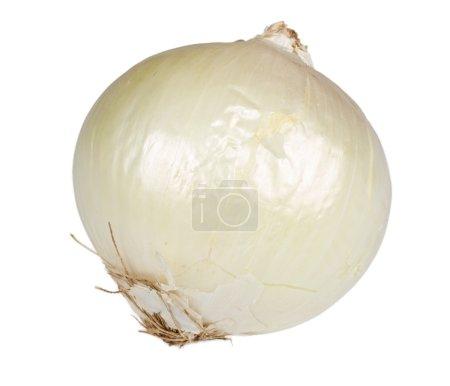 Ripe onion on a white