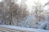 Zimní cesta lesa