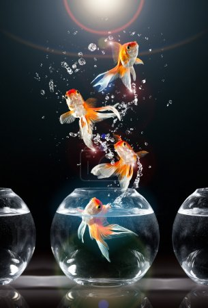Photo for Goldfishs jumps upwards from an aquarium on a dark background - Royalty Free Image