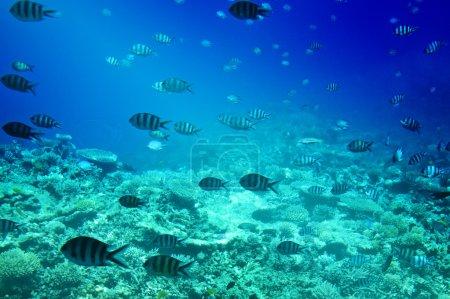Photo pour Merveilleux monde sous-marin de la mer Rouge . - image libre de droit