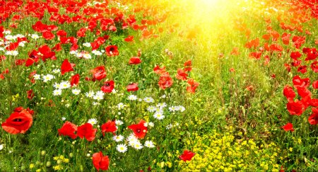 Photo for Splendid summer morning on the green meadow. - Royalty Free Image