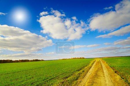 Weg führt über ein herbstliches Feld mit grünem Weizen.