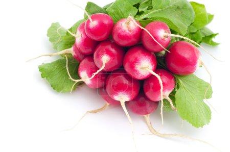 Photo pour Bouquet de radis frais sur fond blanc - image libre de droit