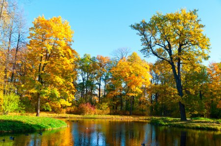 Photo for Beautiful autumn park at evening before sunset - Royalty Free Image