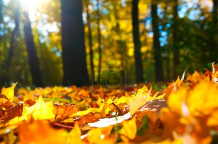 Macro photo of a fallen leaves in autumn forest, s...