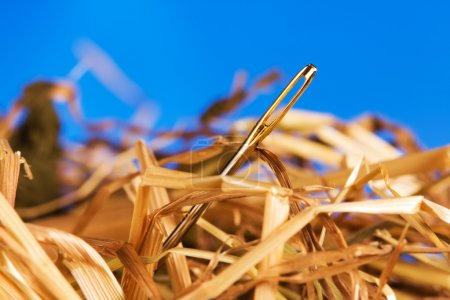 Photo for Close-up of a needle in a hay - Royalty Free Image