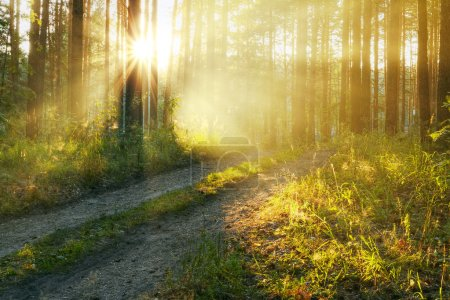 Photo for Sunset in the woods - Royalty Free Image