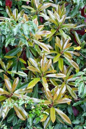 junge Blätter einer Pflanze