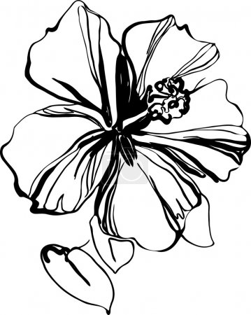 Illustration for Hibiscus black and white sketch drawing a houseplant - Royalty Free Image