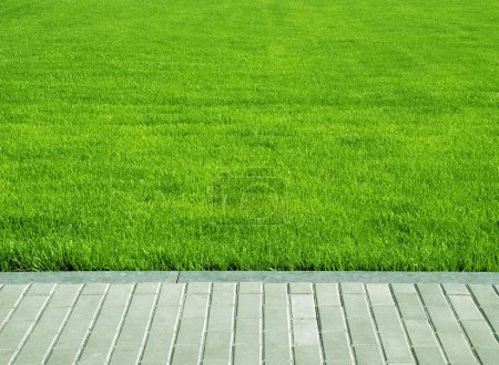 Photo for Lawn, grass plot - Royalty Free Image
