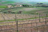 Italy. Tuscany region, Val D'Orcia valley.