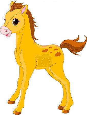 Cute Horse foal