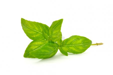Photo for A fresh green basil isolated on a white background - Royalty Free Image
