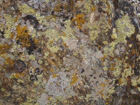 Lichen texture background