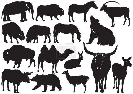 Illustration pour Silhouettes noires vectorielles d'animaux sauvages sur blanc - image libre de droit