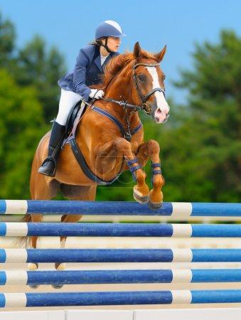 Photo pour Sports équestres - show jumping (jeune femme et l'étalon alezan) sur fond de nature - image libre de droit