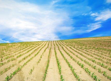 Field over blue sky