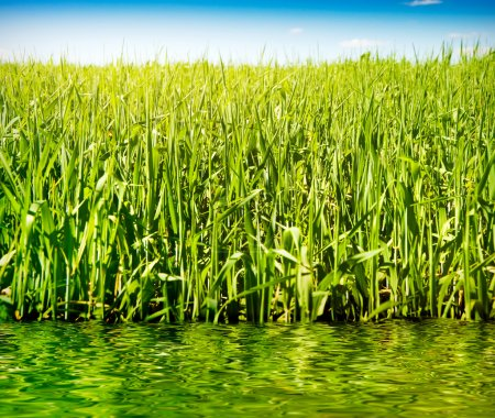 Grass sky and water