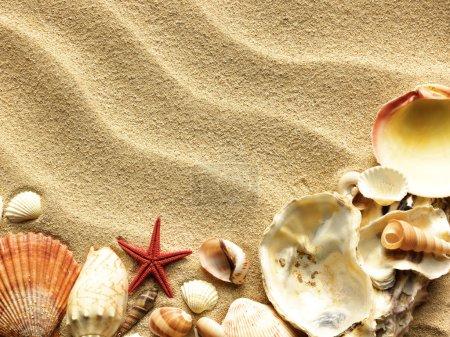 Foto de Conchas de mar con la arena como telón de fondo - Imagen libre de derechos