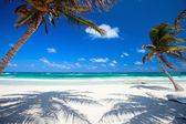 """Постер, картина, фотообои """"кокосовые пальмы на пляже"""""""