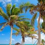 Perfect Caribbean beach in Tulum Mexico...