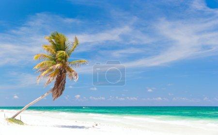 Coconut palm at beach