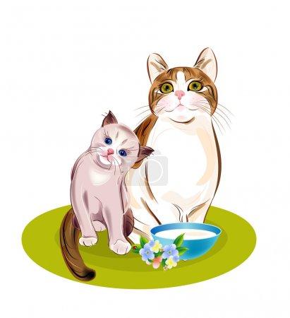 Katzenfamilie. Katze und Kätzchen werden fressen.
